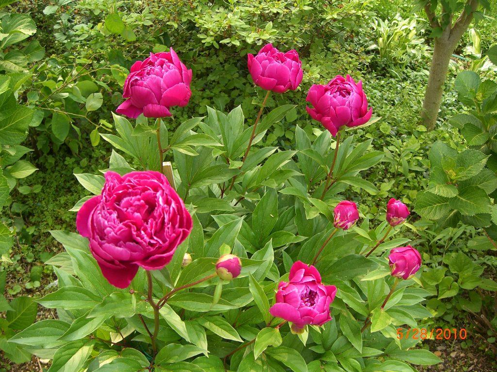 תרומת פרחים לאושר ולבריאות